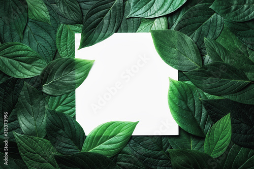 Obraz Paper card in green leaves pattern. Beautiful nature background. - fototapety do salonu
