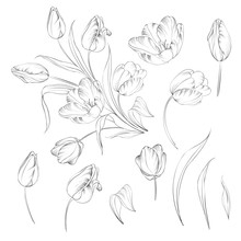 Hand Drawn Tulips Collection I...