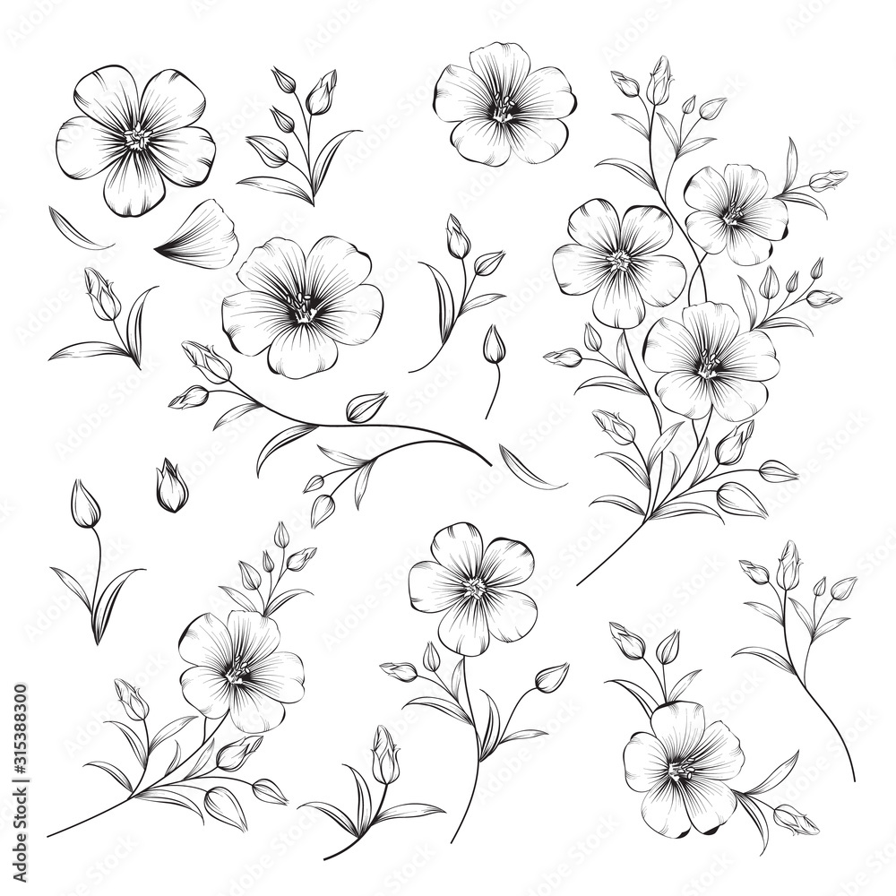 Fototapeta Set of linum flower elements. Collection of flax flowers on a white background. Vector illustration.