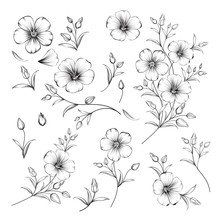 Set Of Linum Flower Elements. Collection Of Flax Flowers On A White Background. Vector Illustration.