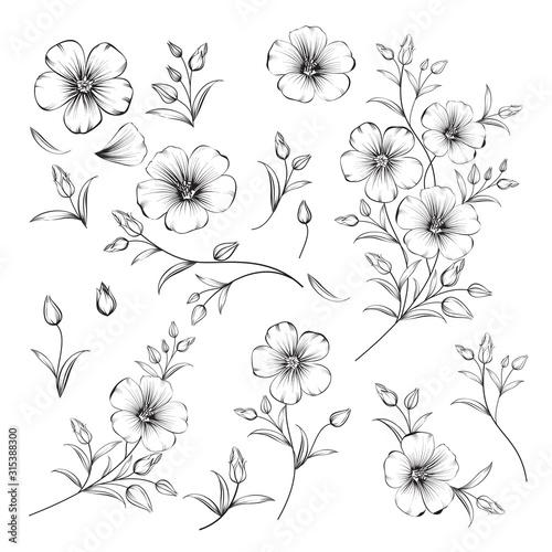 Stampa su Tela Set of linum flower elements