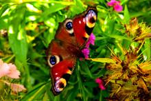Beautiful Butterfly On Colorfu...