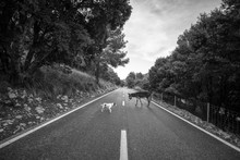 Black And White Dog And Donkey Meeting On Asphalt Road On Cloudy Day In Countryside