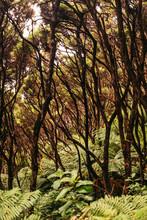 Big Green Leaf Of Tropical Fern With Wild Greenery On Background At Jungle Of Coromandel Peninsula