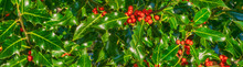 Holly And Red Berries Banner Background Image