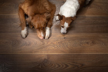 Two Dogs Lay On A Background O...