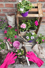 Flowers In Pots And Gardening ...