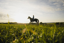 Woman Riding Horse On A Field ...