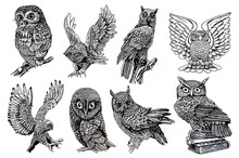 Graphical Sketch Of Owls Isola...