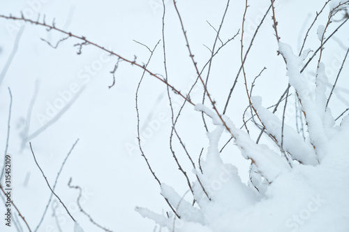 Fotografie, Obraz  Wild beauty of the winter nature of rural Russian remote places