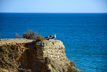 Portimão / Algarve, Portugal - Four Gulls Sit On A Rock, One Adult And Three Chicks, Against The Blue Ocean And Blue Sky, In The Summer Afternoon.