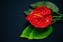 Top View Red Anthurium Flower ...