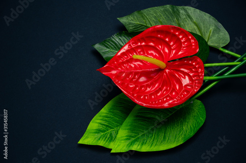Photo top view red Anthurium flower on a black background with copy space