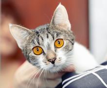 Portrait Of A Non-native Cat, ...