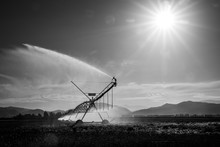 An Irrigator Sprays Water Over...