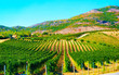 Rural landscape. Beautiful vineyards and agricultural Scenery of Perdaxius, Carbonia-Iglesias. Panorama in South Sardinia island of Italy. Sardegna in summer. Cagliari province. Mixed media.