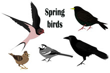 Set Of Spring Migratory Birds ...