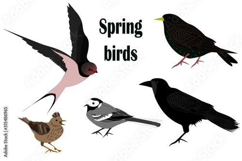 Set of spring migratory birds isolated on white background. Slika na platnu