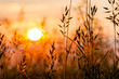 canvas print picture - roter Sonnenaufgang Feld