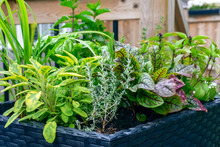 Fresh Food From Your Own Garden Is Part Of A Healthy Lifestyle. Planted In Spring, These Herb Filled Patio Containers Are  Loaded With A Variety Of Herbs Ready To Be Harvested All Summer.