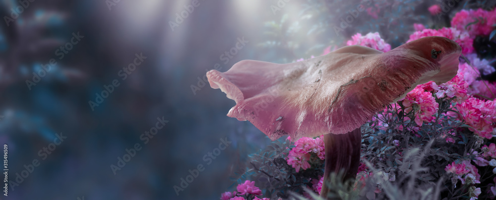 Fototapeta Magical fantasy large mushroom in enchanted fairy tale forest with fabulous fairytale blooming pink rose flower garden on blurred mysterious blue background and shiny glowing moon rays in the night