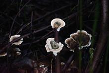 Glowing Fungus