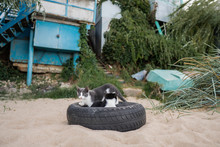 Two Little Cats On The Beach A...