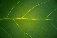 Green Leaf Texture Background ...