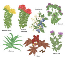 Medical Plants And Herbs Set. ...