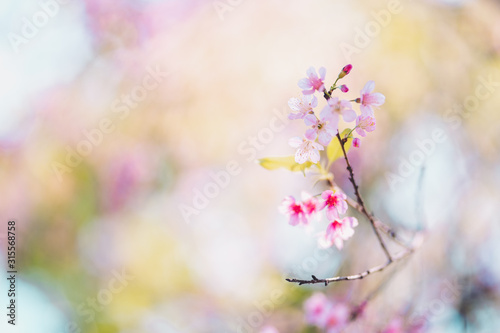 Spring nature,Bloom pink flowers and bright skies