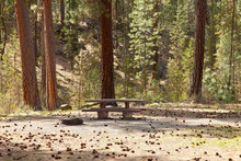 Picnic Area In The Forest Cent...