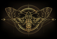 Golden Moth Over Sacred Geomet...