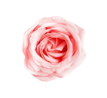 Sweet Rose Flower With Water D...
