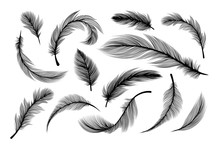 Feathers, Vector Black Silhoue...