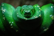 Green Snake Coil