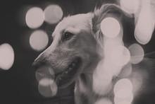 Happy Dog On Bokeh Background