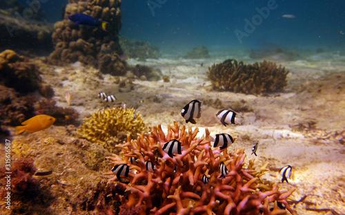 ryby o nietypowych kształtach i kolorach na rafie koralowej