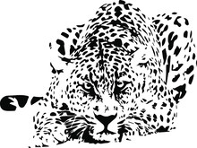 Hand Drawn Wild Snow Leopard. ...