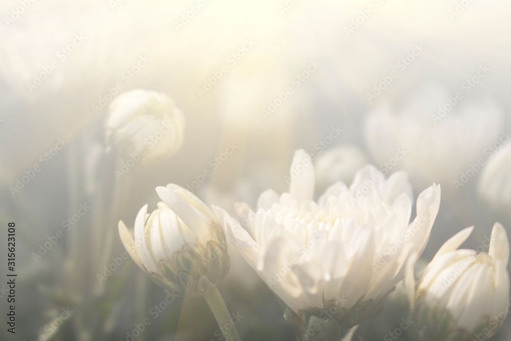 Floral background blooming in pastel tones