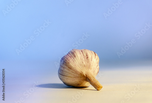 Aromatic garlic on a white background and blue light. Canvas Print