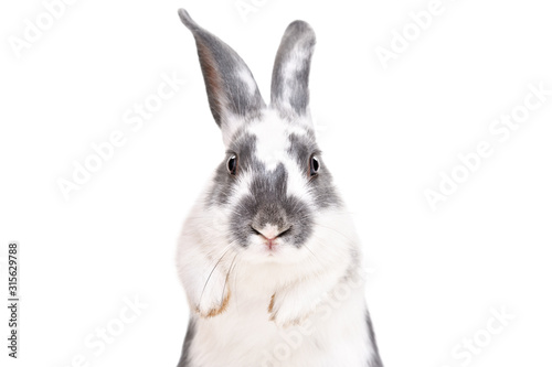 Portrait of a funny cute rabbit, closeup, isolated on a white background Fototapeta