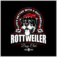 Rottweiler - Vector Illustrati...