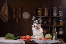 Dog In The Kitchen. Healthy, N...