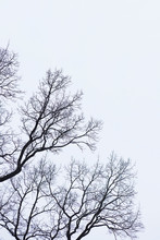 Naked Branches Of A Tree Against Blue Sky Close Up. Silhouette Naked Branches Of A Tree Against Blue Sky Close Up. Natural Color Silhouette Of A Leafless Tree Against An Overcast Sky.