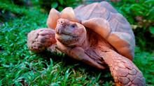 A Small Turtle Runs Directly O...
