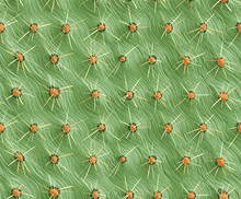 Seamless Background, Cactus With Spikes. The Texture Of The Cactus. Prickly Pear.