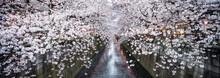 Nakameguro Cherry Blossom Fest...