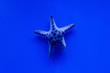 Leinwandbild Motiv starfish swimming under water in aquarium with blue lighting