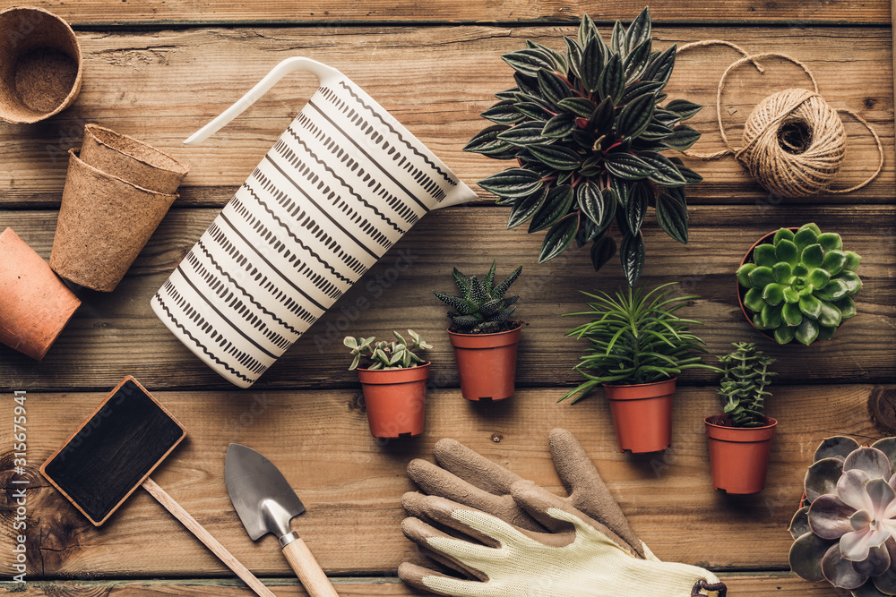 Fototapeta Collection of various succulent plants and garden tools on wooden background