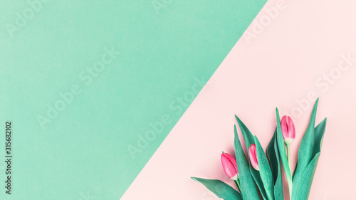 Bouquet of fresh pink tulips on pink and mint neo green background. Flat lay with copy space, Birthday gift. Valentines 8 March Women's or Mothers Day celebration greeting card or minimal banner